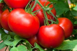 eat more Tomatoes