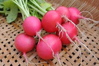 radish is a pretty good keto vegetable